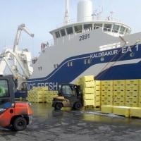 ビジター船が東部の港で水揚げ  アイスランド