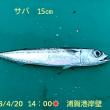 笑転爺の釣行記 4月20日☀ 久里浜・浦賀