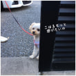 日曜日のお散歩とムサコのカフェ