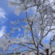 2月22日(木)のつぶやき