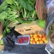 なぜ無肥料でも野菜が育つのでしょう?