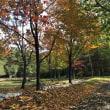 落ち葉の季節になりました。