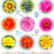 花壇の花~木染月~