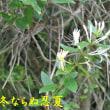 久しぶりの芋谷 07/11