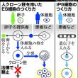 再生医療に使えるヒトES細胞を作ることに成功し、京大が初めて全国に提供へ。