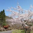 郷の春(日之影中川地区のチューリップと西郷のこいのぼり)
