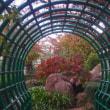 今の時期@花と緑の学習園
