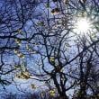 1月の神代植物公園:ロウバイ