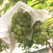 読売旅行 葡萄9品種食べ放題とドイツの森バスツアーの巻