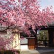 京都 ― No.1 桜に会う