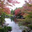 姫路好古園の紅葉