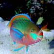 神様のデザイン 魚類