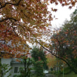 2017年 椿峰ニュータウンの紅葉