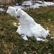 立春に雪!