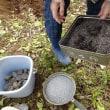 ジャガイモ植え付けOK