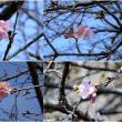 上大島キャンプ場付近の春の訪れ