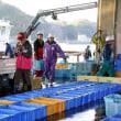 魚市場風景・波切漁港
