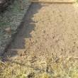 緑米一反分種落とす