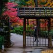 紅葉の太田黒公園