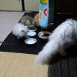 子猫たちの晩ごはん?というよりおやつ?