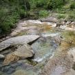 楽しかった赤沢自然林の散策