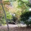 秋色の公園で