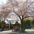 秦野桜散歩5出雲大社相模分祠の桜