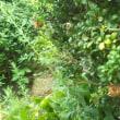 今朝、蝉が鳴いていたから、梅雨明け宣言かあ・・・環境保護、公害対策