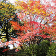 昨日六義園の紅葉を見て来ました