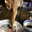今日も猫日和〜💝