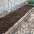 春玉ネギの定植&温床の土堀り
