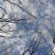 静かに春を待つ林