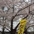 高田城百万人観桜会・・日本三大夜桜