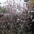 春、海岸沿いは桜満開です!全国的に、春ーっ!