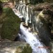 コタニワタリ 淨丸の滝