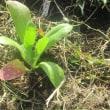 花の定植4種類 畑の花壇に