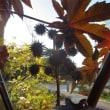 三陽メディアフラワーミュージアム⑥ 庭で見た花や実