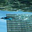 サンシャイン水族館行ってきました。