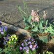 4月後半の庭仕事