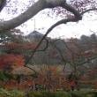 裏山は秋色