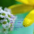 photo poem - ときめき -