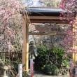 香取神社(香梅園)2018.2.18