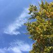 3回目の里山ガーデン秋バージョン