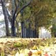 171116 今日はラッキーデイ、松延池で素敵な女性とコウノトリに遭遇!!