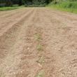 小豆土寄せ、久々の雨