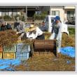 蕎麦の収穫(脱穀作業)