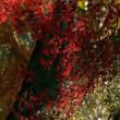 萬葉植物園の紅葉