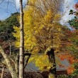 奈良県の曽爾高原へ