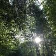 ケルトと自然と人の領域