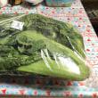 高菜の炒め物の作り方